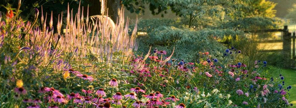 Erbacee perenni la rosa del borghetto perugia for Piante ornamentali perenni